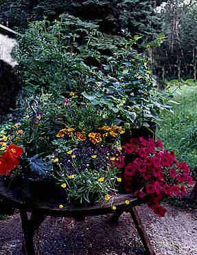 Tabletop Garden - 01b.jpg, copyright �98 Buddy and Hallie du Preez, all rights reserved; 24.3k