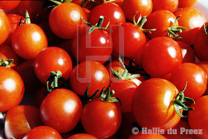 Sweet 100 tomatoes - copyright �00 by Hallie du Preez, all rights reserved